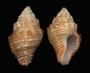 (Unidentified Shells 06)